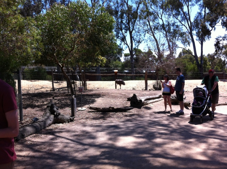 Emu Enclosure