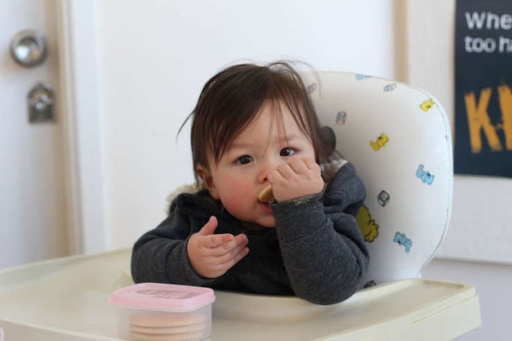 Atticus eating arrowroot biscuit in highchair